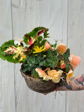 Terrine de plante de saison...